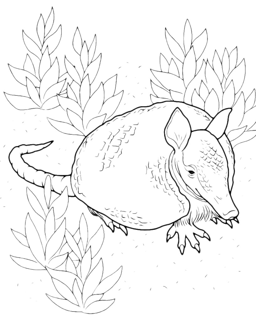 Animali - Armadillo