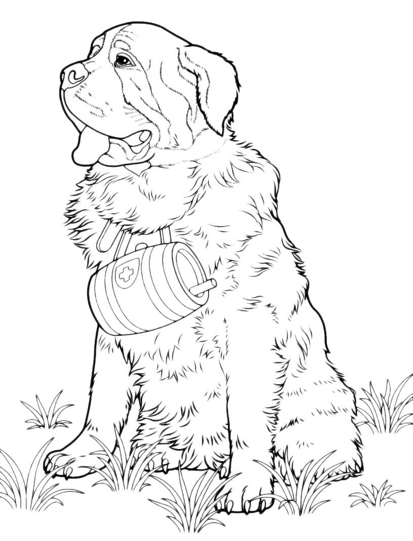 Animali cane san bernardo for Cane da colorare e stampare