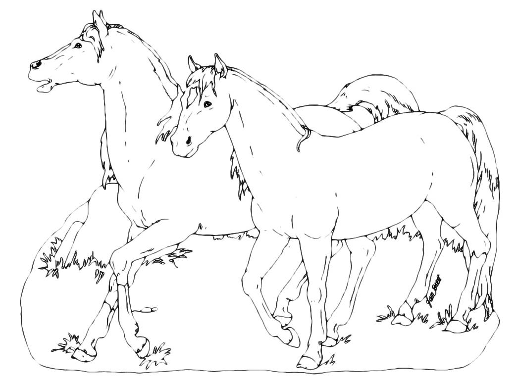 Animali cavalli for Disegni da colorare dei cavalli