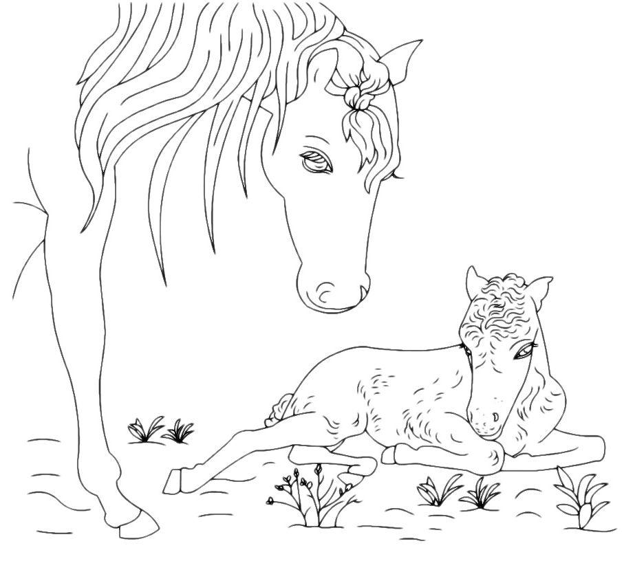 Animali cavallo con cucciolo - Cucciolo da colorare stampabili ...