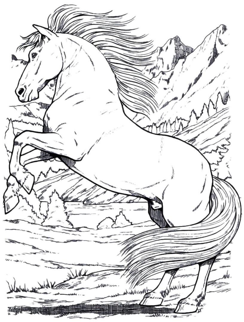 Animali cavallo selvaggio for Immagini di cavalli da disegnare