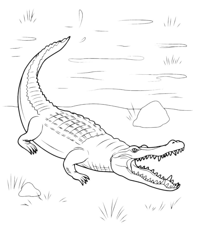 animali coccodrillo con la bocca aperta