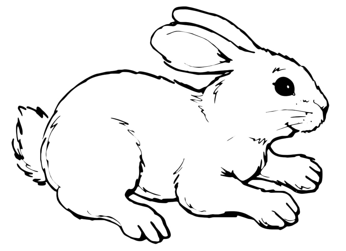 Animali coniglio for Coniglio disegno per bambini
