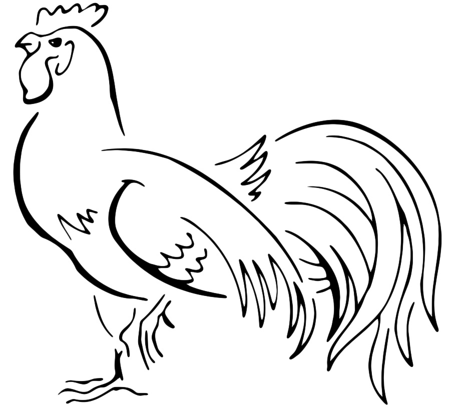 Animali - Gallo