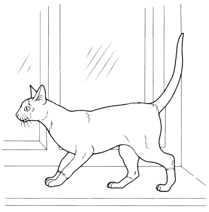 Animali gatto alla finestra - Finestra da colorare ...