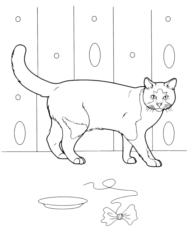котенок чб фото