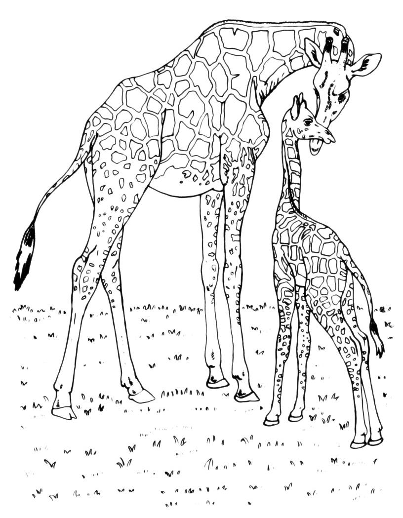 Animali giraffa con cucciolo for Cane da colorare e stampare