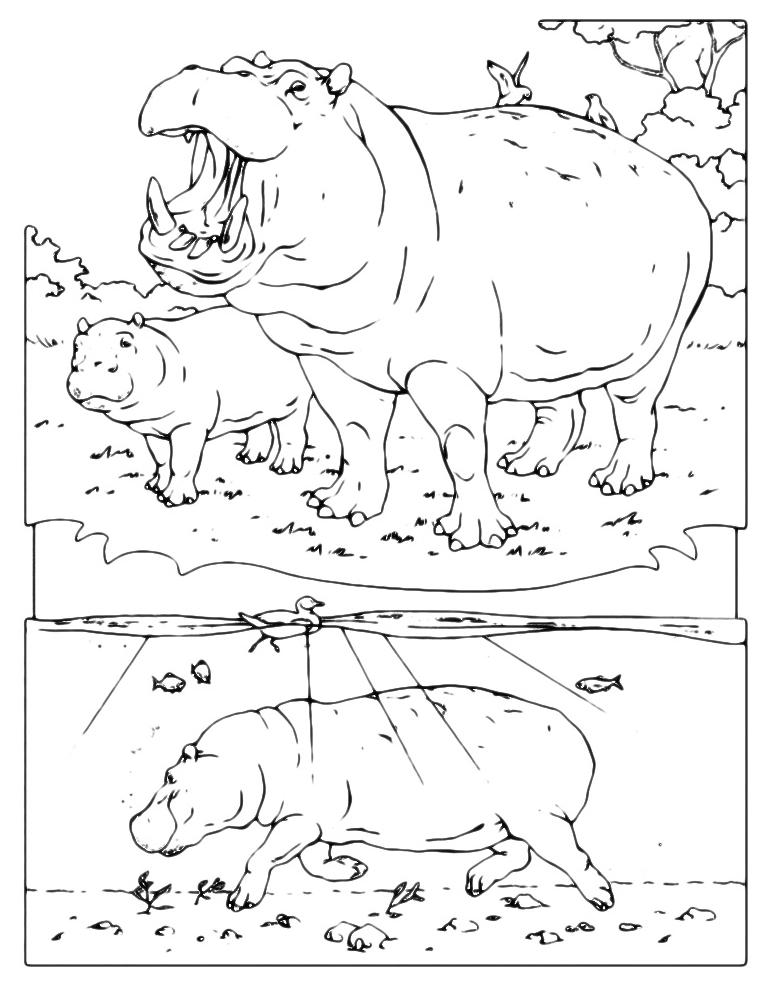 Animali ippopotamo nel suo ambiente for Suo e suo armadio