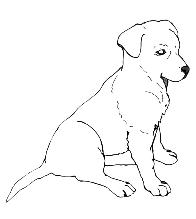 lab puppies coloring pages - photo#41