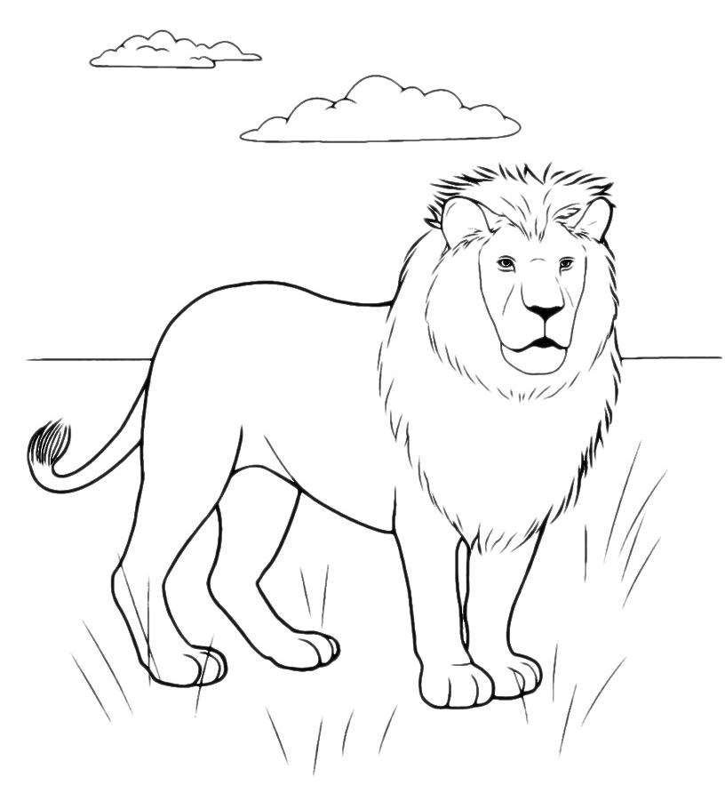 Animali leone nel suo ambiente for Suo e suo armadio