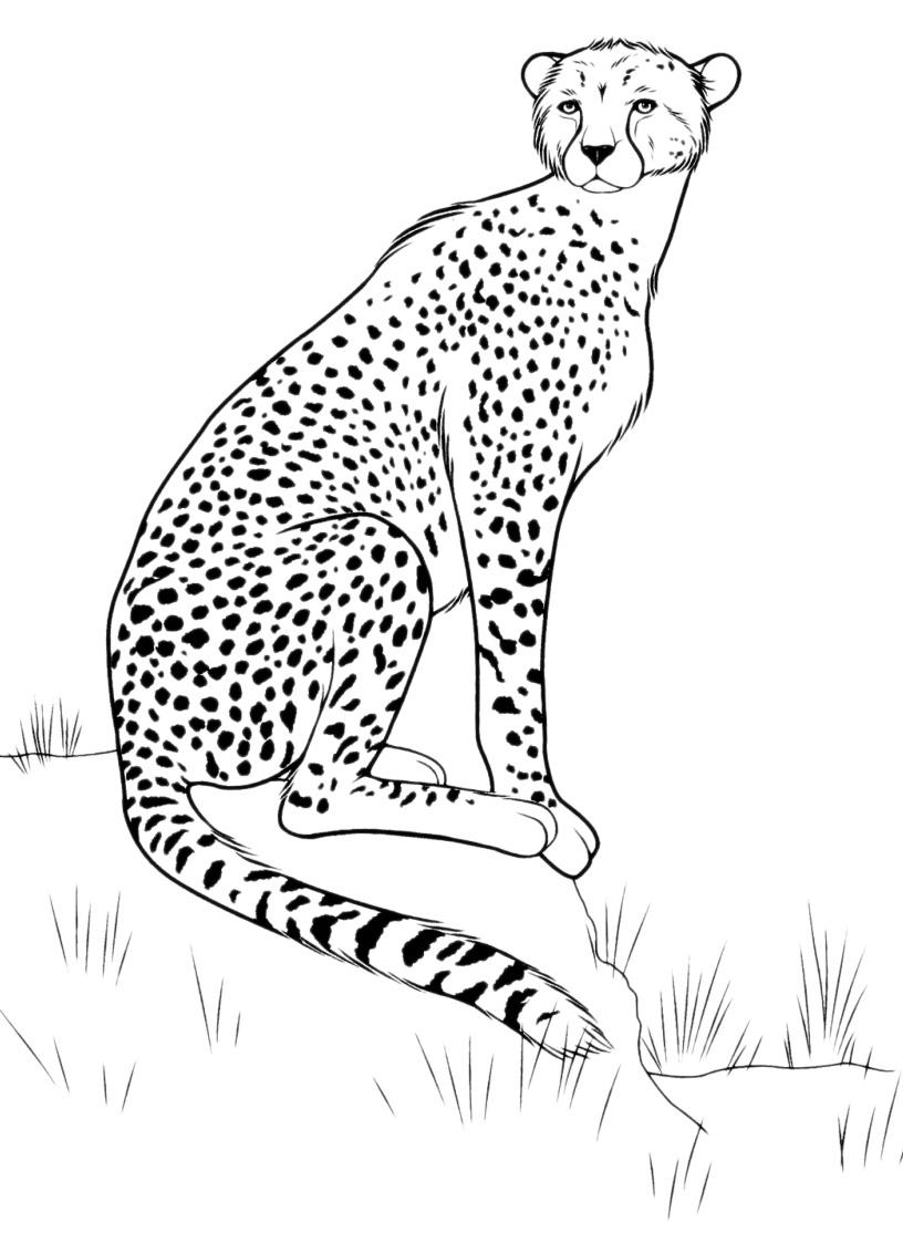 animali  leopardo nel suo ambiente