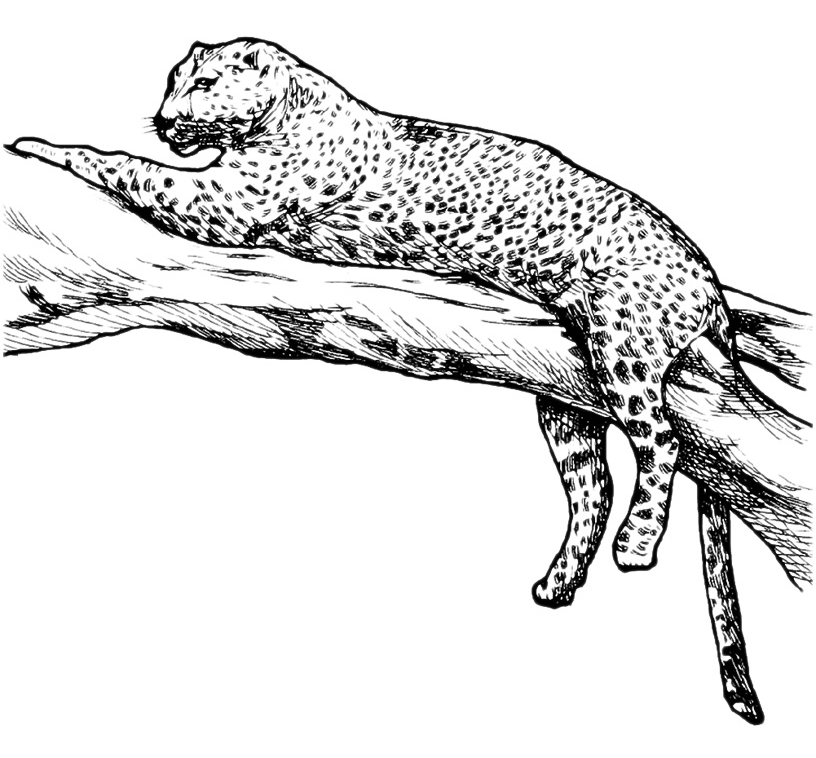 Animali - Leopardo sdr...