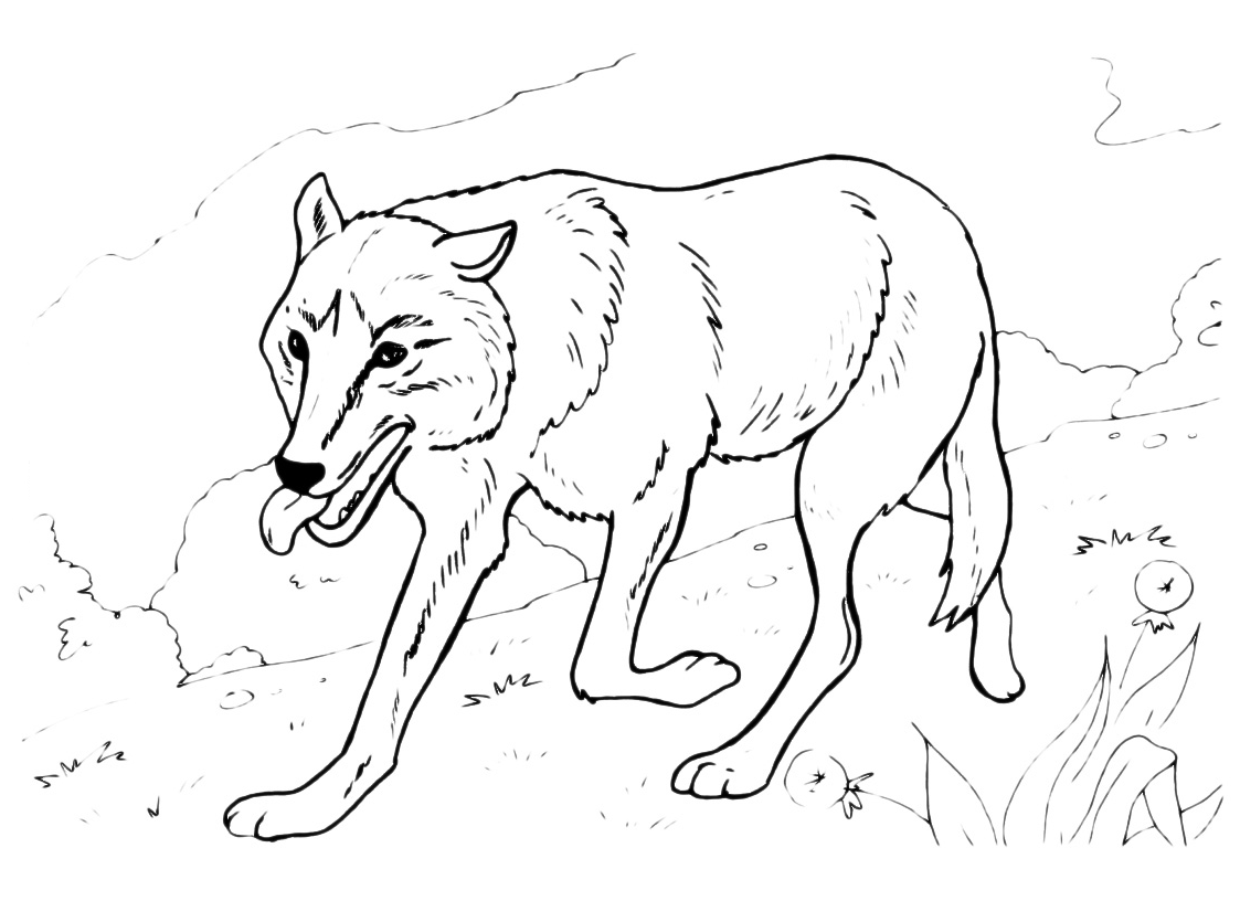 Animali lupo che cammina - Lupo mannaro immagini da colorare ...