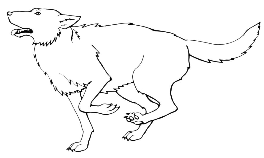 lupo che corre 001