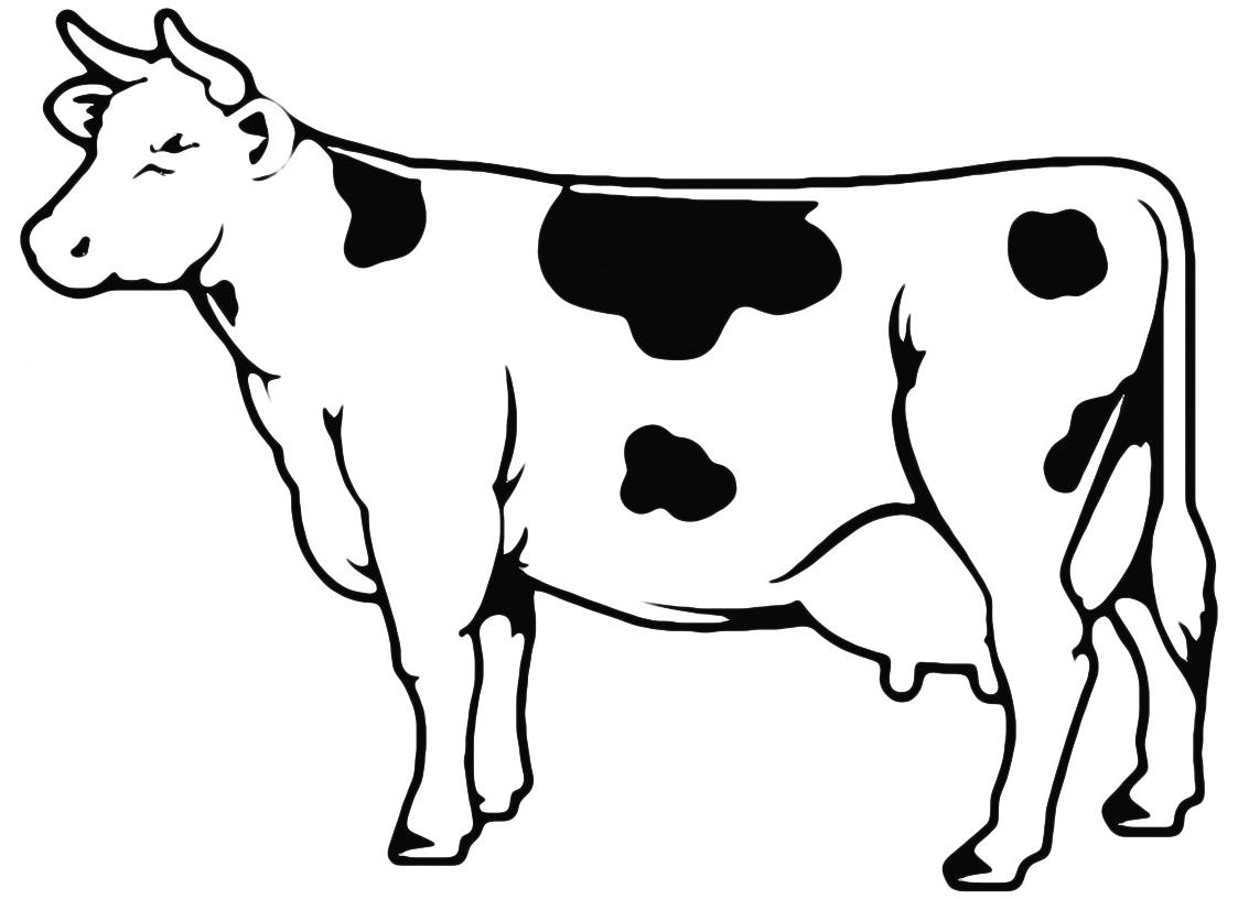 Animali - Mucca