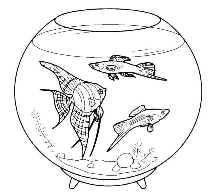 Animali pesci in acquario for Pesci da stampare e colorare