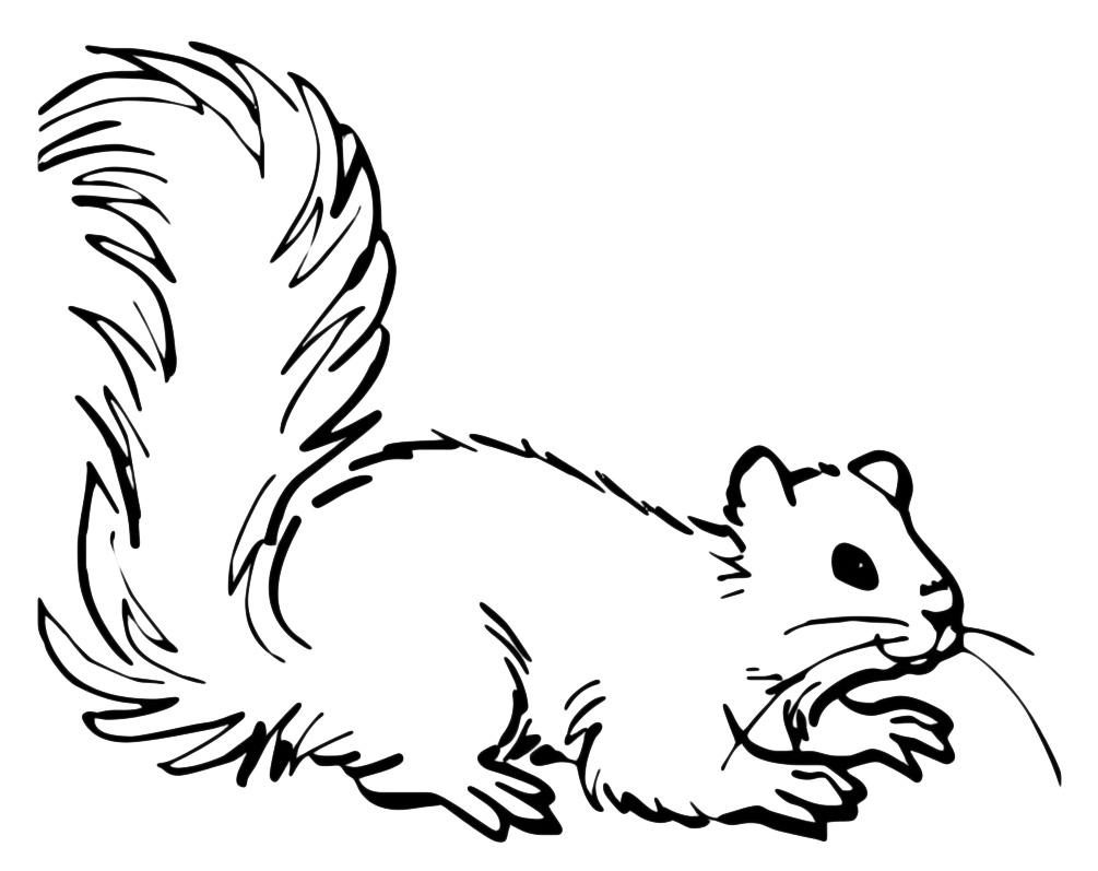 Animali scoiattolo for Disegni da colorare animali della foresta
