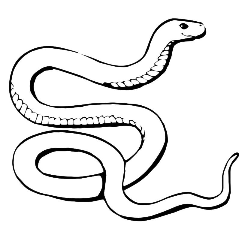 Animali serpente for Disegni di tigri da colorare