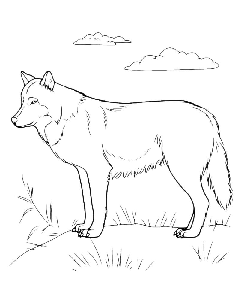 Animali siberian husky for Cane da colorare e stampare