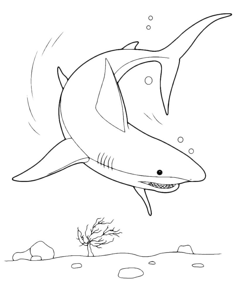 Animali squalo for Immagini di pesci da stampare