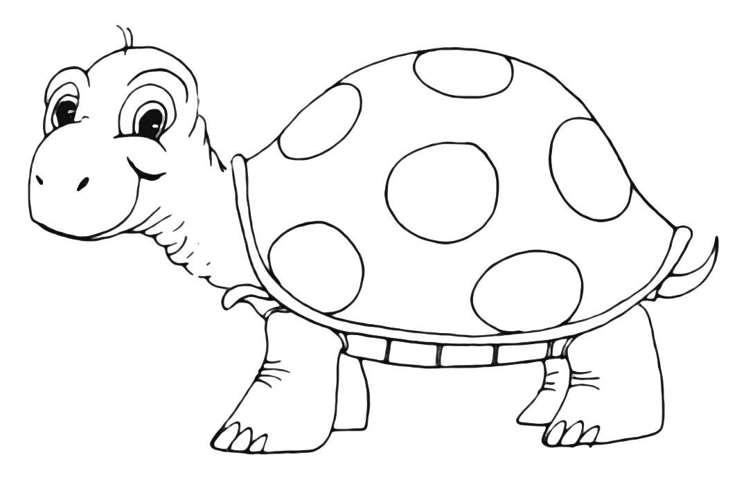 Animali tartaruga - Immagini di animali da stampare gratuitamente ...
