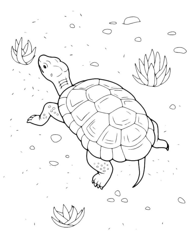 Animali tartaruga di terra for Disegno terra da colorare