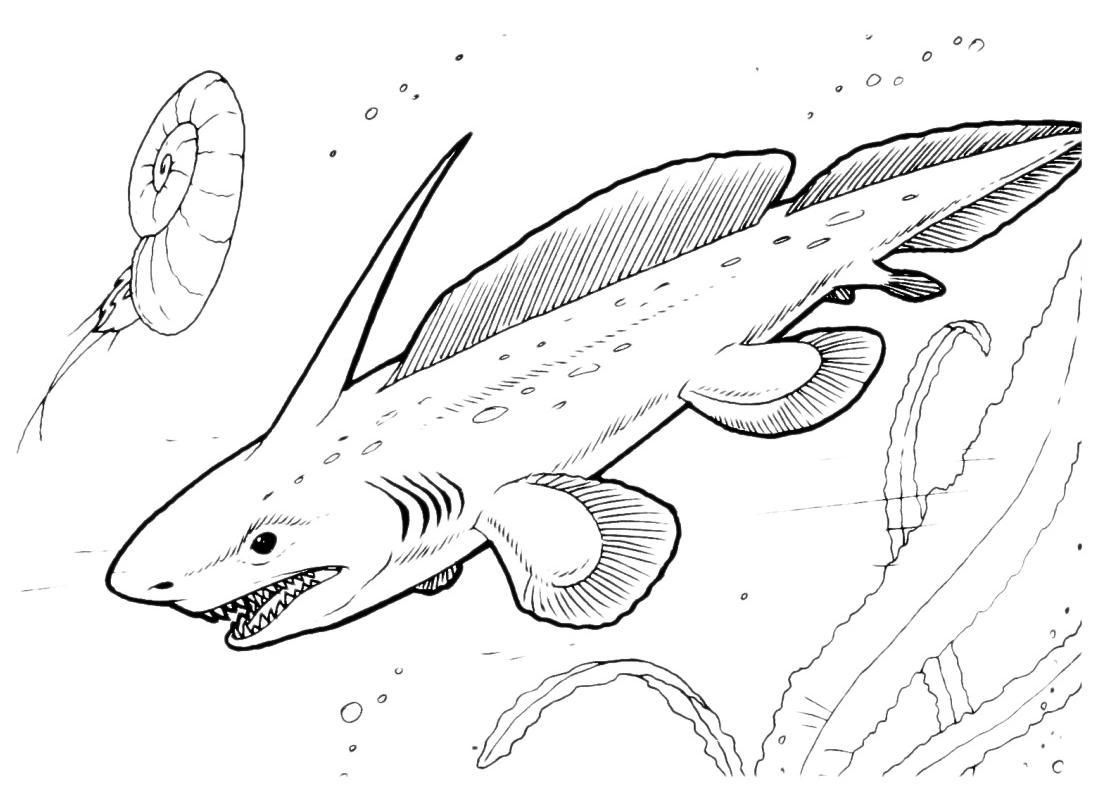 Dinosauri un dinosauro marino nuota nelle profondit for Disegni da colorare dinosauri
