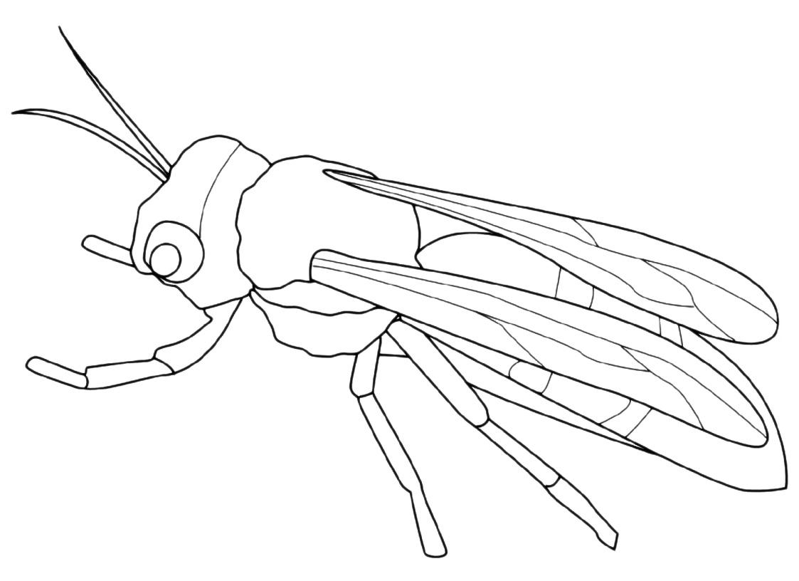 Insetti - ape