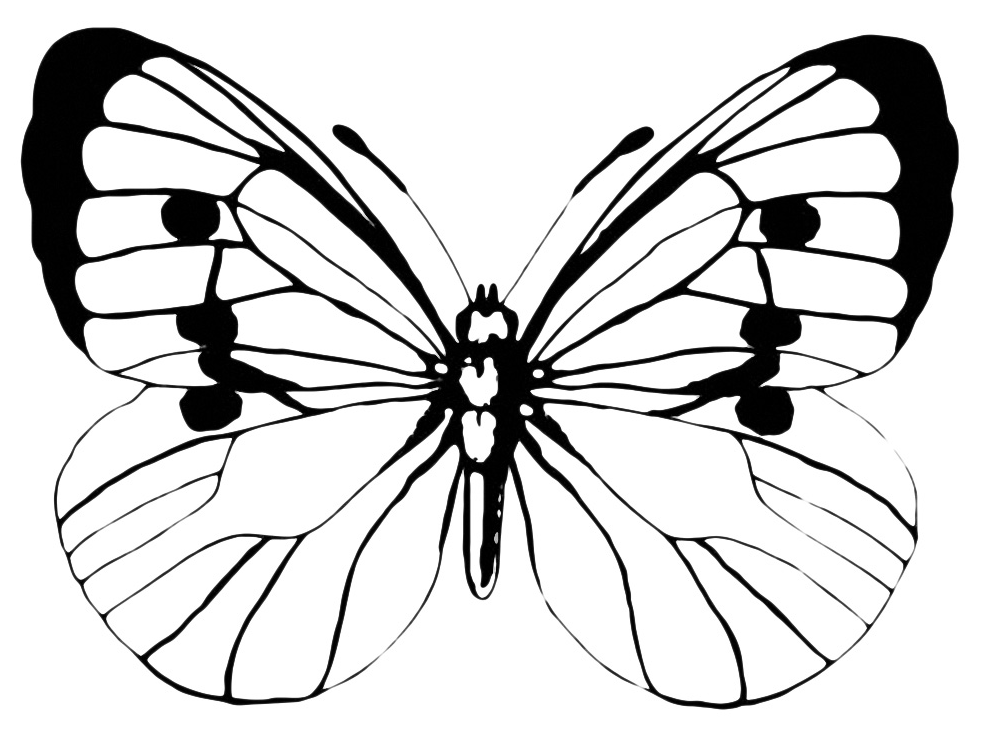 Insetti Farfalla