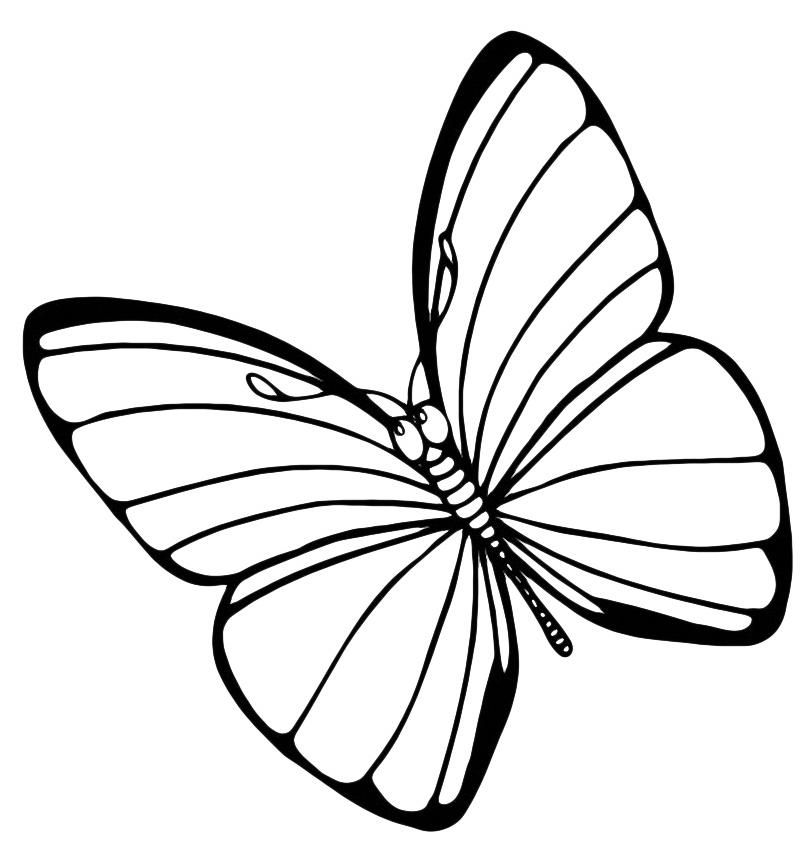 Insetti - farfalla