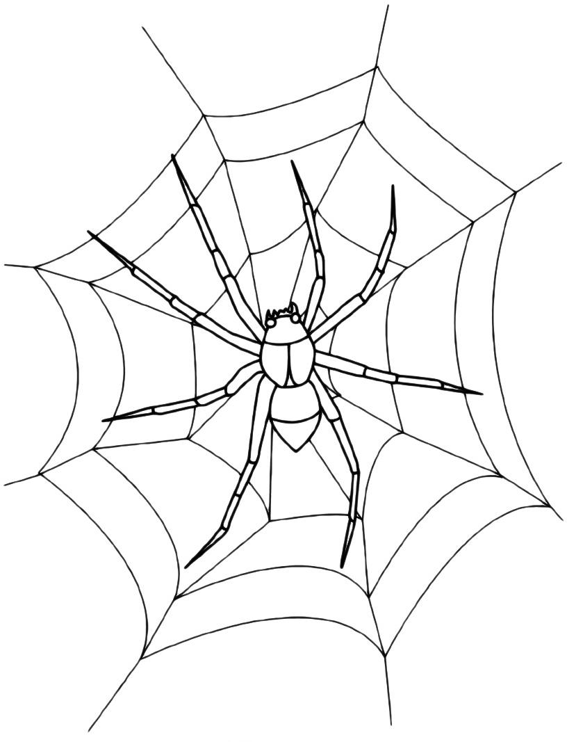 Insetti ragno sulla ragnatela - Immagini del ragno da stampare ...