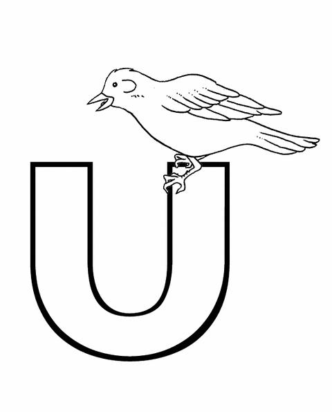 Lettere e numeri lettera u di uccello in stampatello - Lettere animali da stampare ...