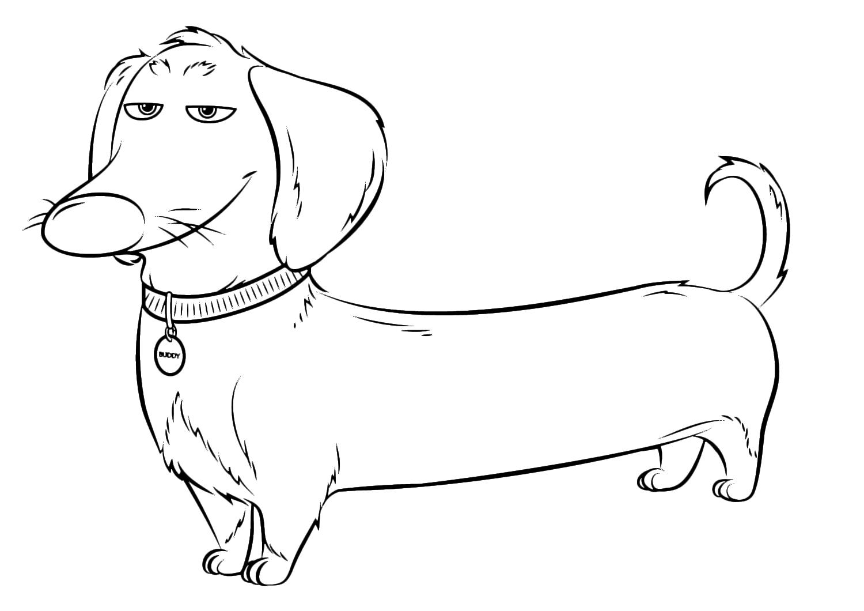 disegni da colorare cani bassotti
